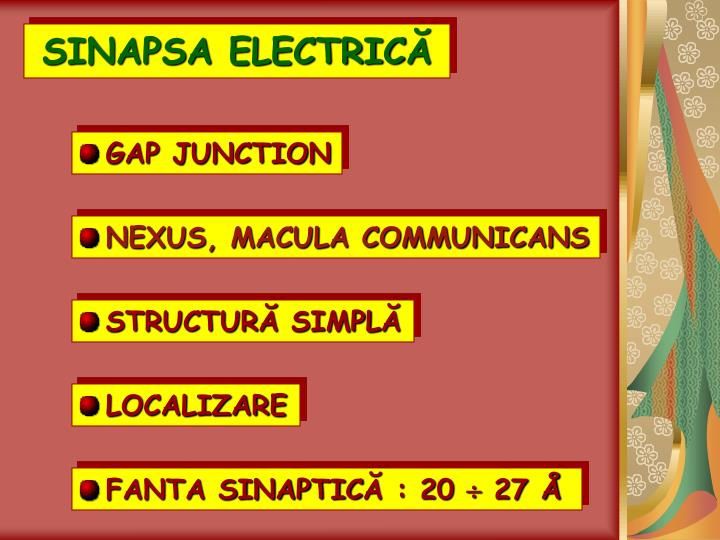 SINAPSA ELECTRIC