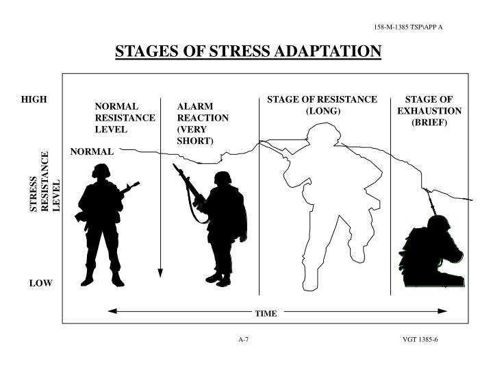 STAGES OF STRESS ADAPTATION