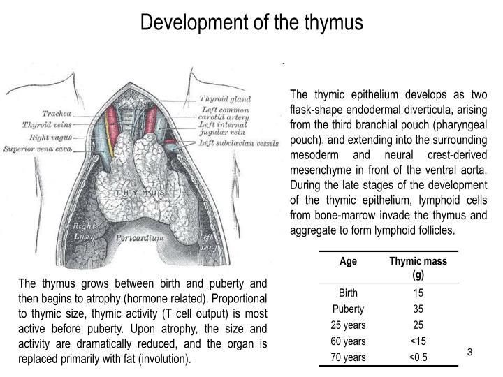Development of the thymus