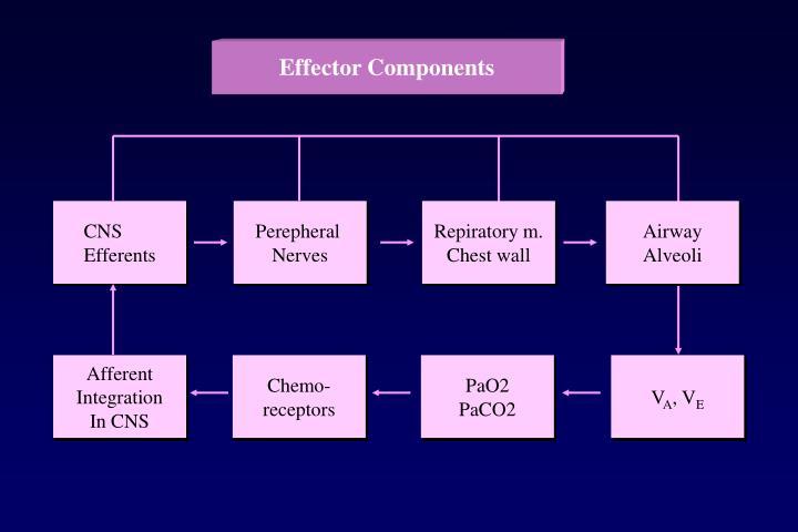 Effector Components