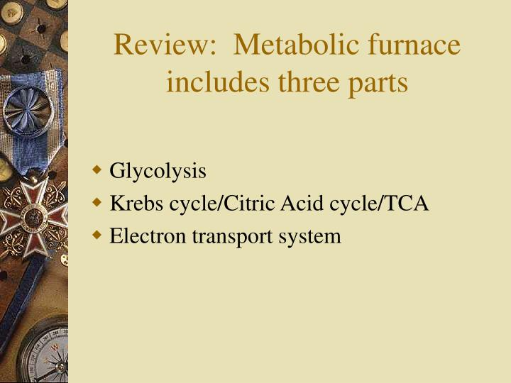 Review:  Metabolic furnace includes three parts