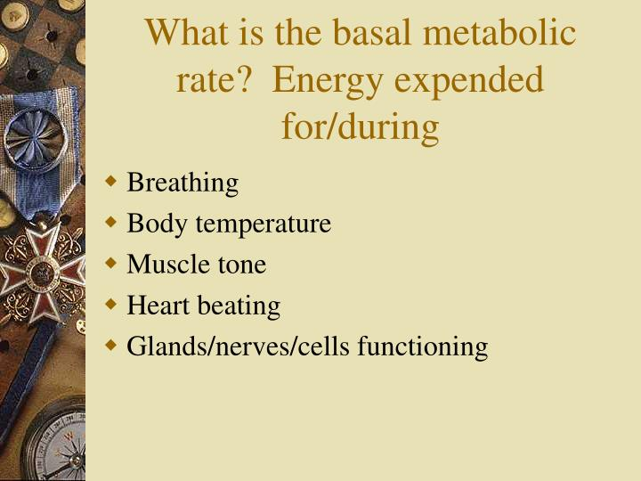 What is the basal metabolic rate?  Energy expended for/during