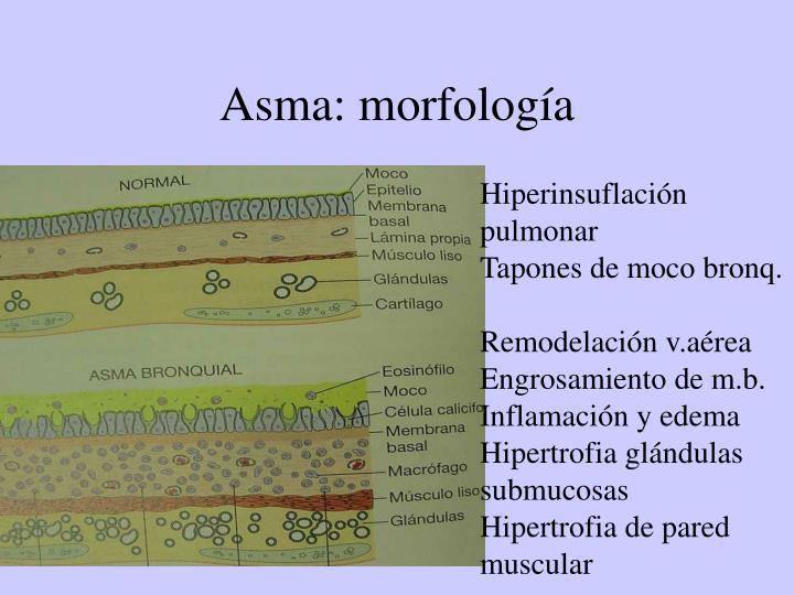 Asma: morfología