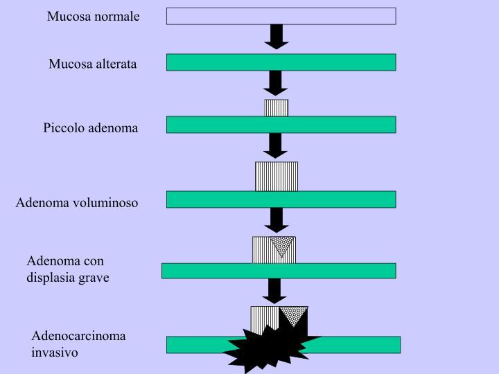 Mucosa normale