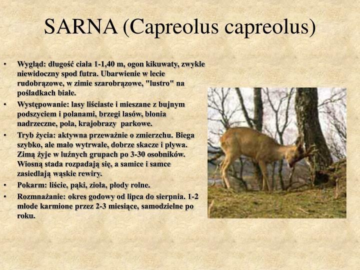SARNA (Capreolus capreolus)