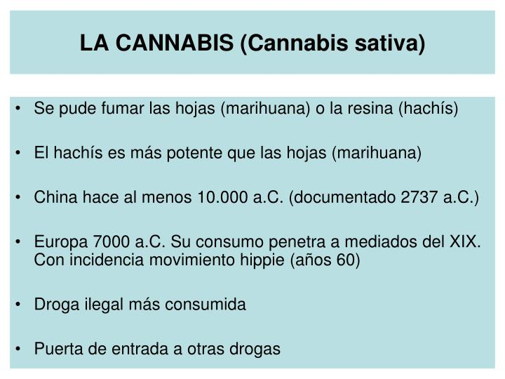 LA CANNABIS (Cannabis sativa)