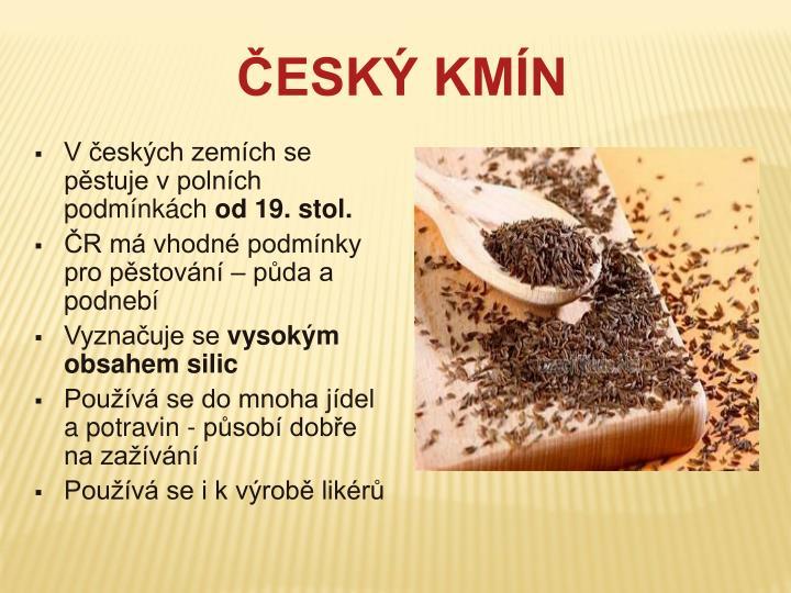 V českých zemích se pěstuje v polních podmínkách