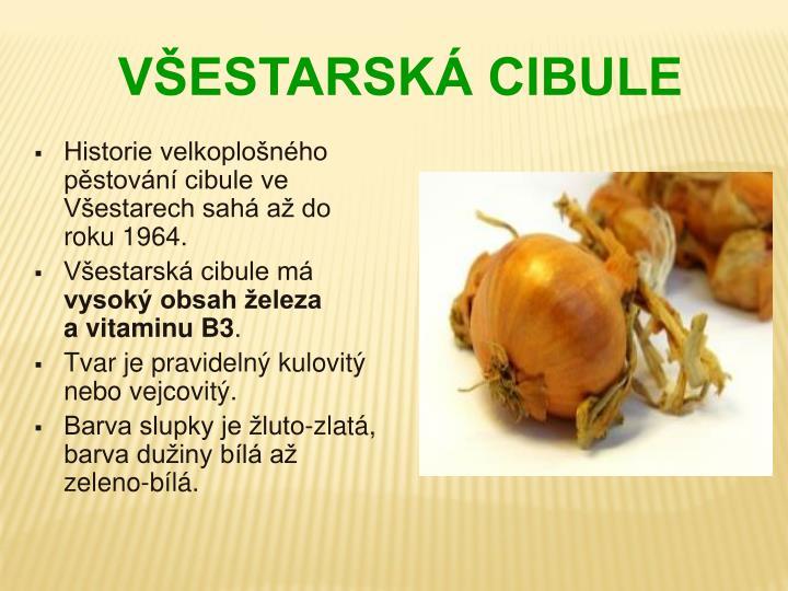 Historie velkoplošného pěstování cibule ve Všestarech sahá až do roku 1964.