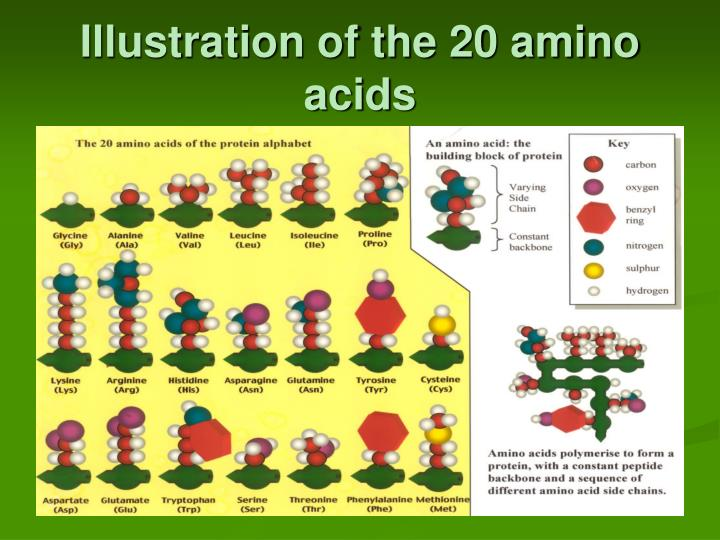 Illustration of the 20 amino acids