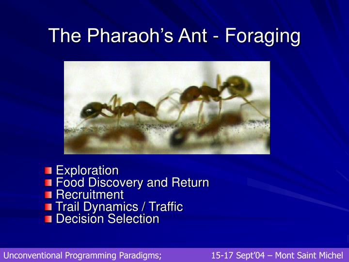 The Pharaoh's Ant - Foraging