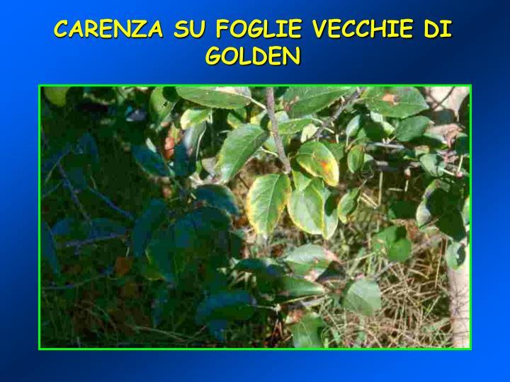 CARENZA SU FOGLIE VECCHIE DI GOLDEN