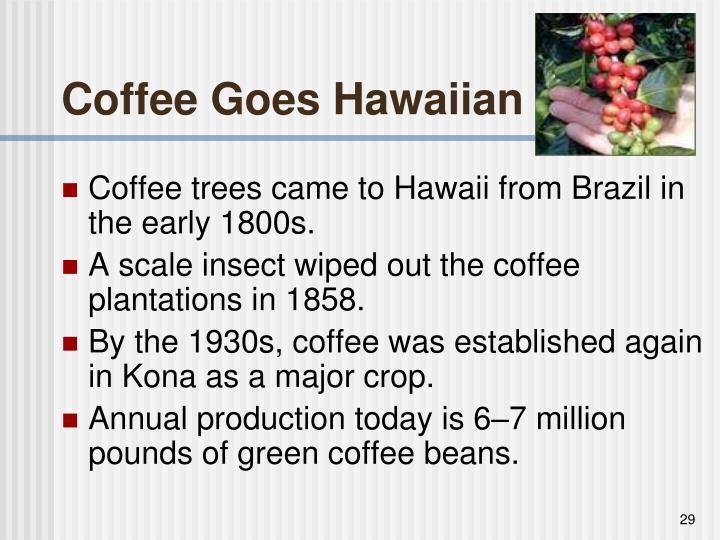 Coffee Goes Hawaiian