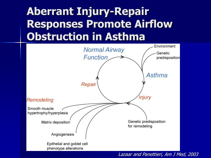 Aberrant injury repair responses promote airflow obstruction in asthma