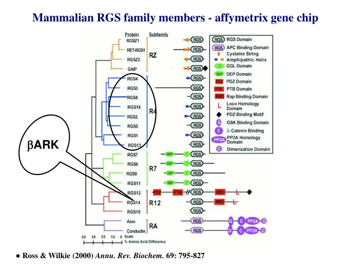 Mammalian RGS family members - affymetrix gene chip