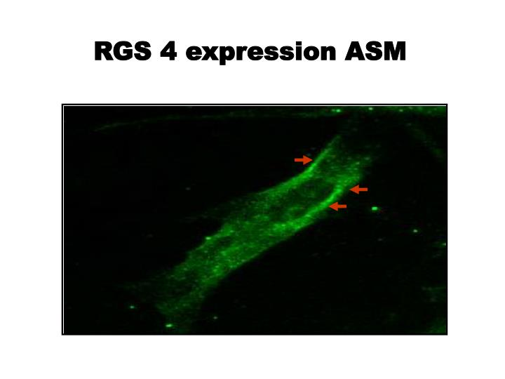 RGS 4 expression ASM