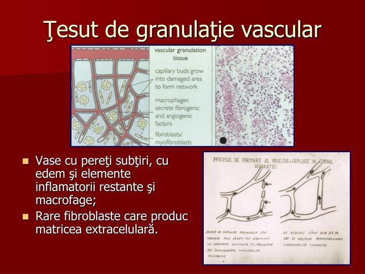 Ţesut de granulaţie vascular