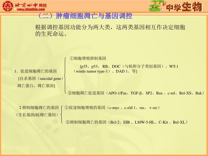(二)肿瘤细胞凋亡与基因调控