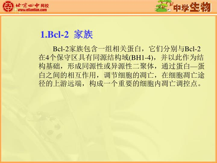 1.Bcl-2