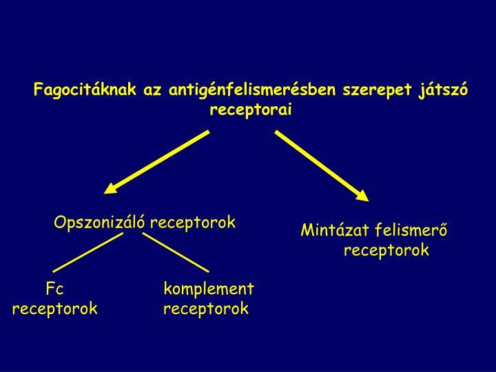 Fagocitáknak az antigénfelismerésben szerepet játszó receptorai