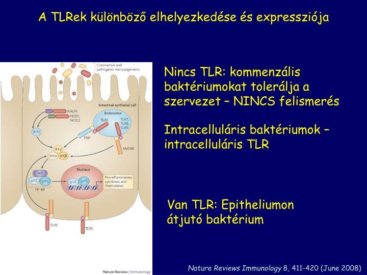 A TLRek különböző elhelyezkedése és expressziója