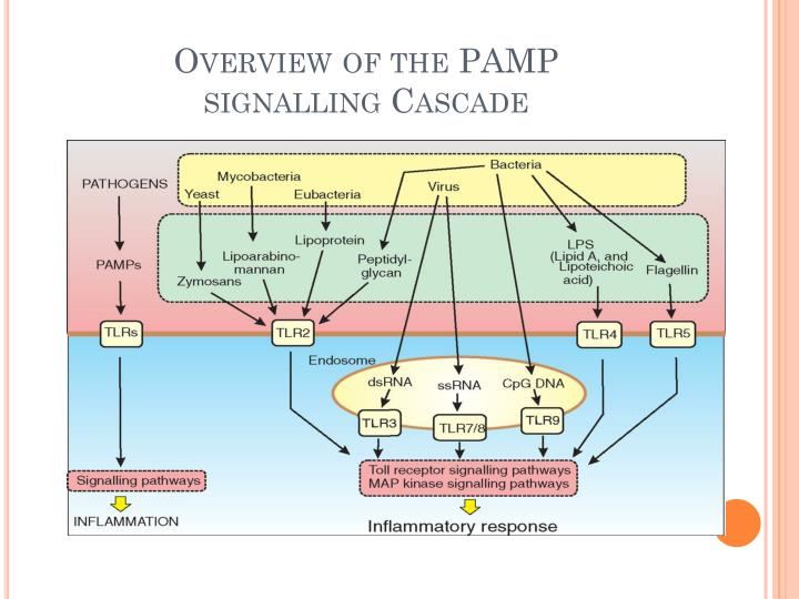 Overview of the PAMP