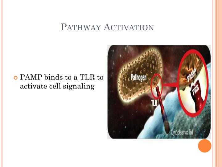 Pathway Activation