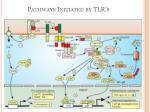 pathways initiated by tlr s