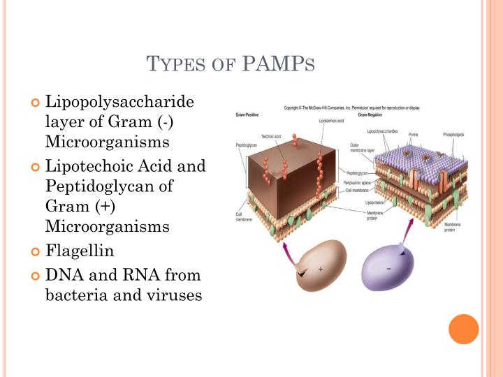Types of PAMPs