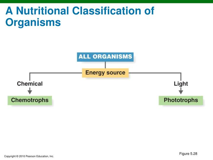 A Nutritional Classification of Organisms