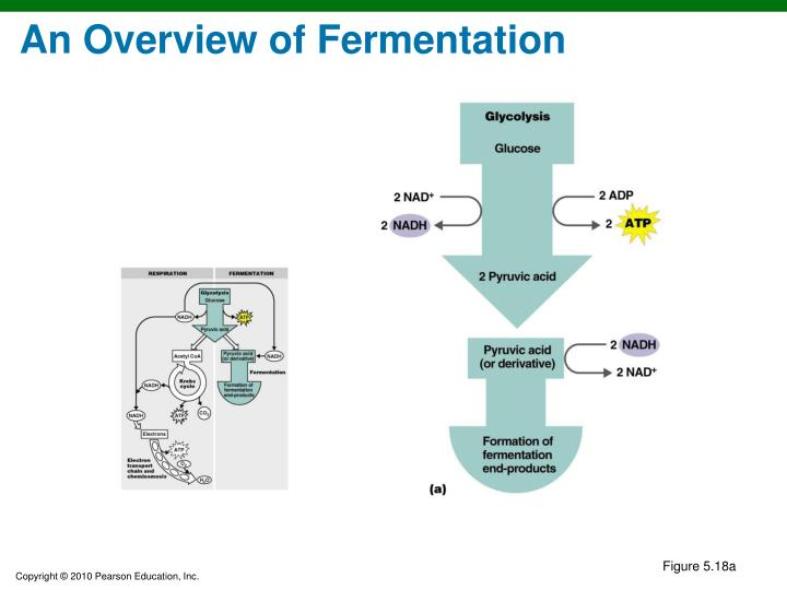 An Overview of Fermentation