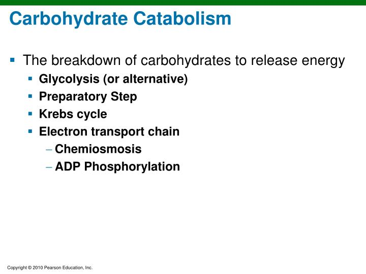 Carbohydrate Catabolism