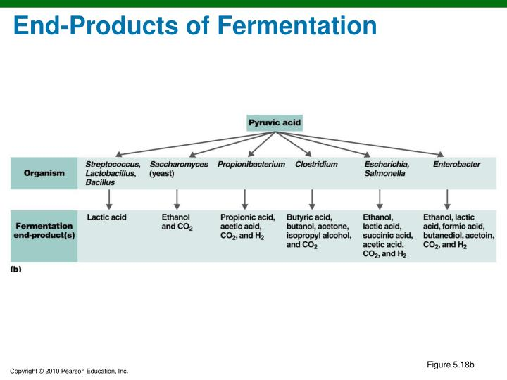 End-Products of Fermentation