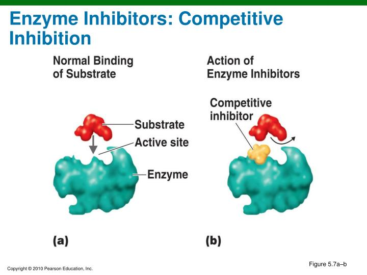 Enzyme Inhibitors: Competitive Inhibition
