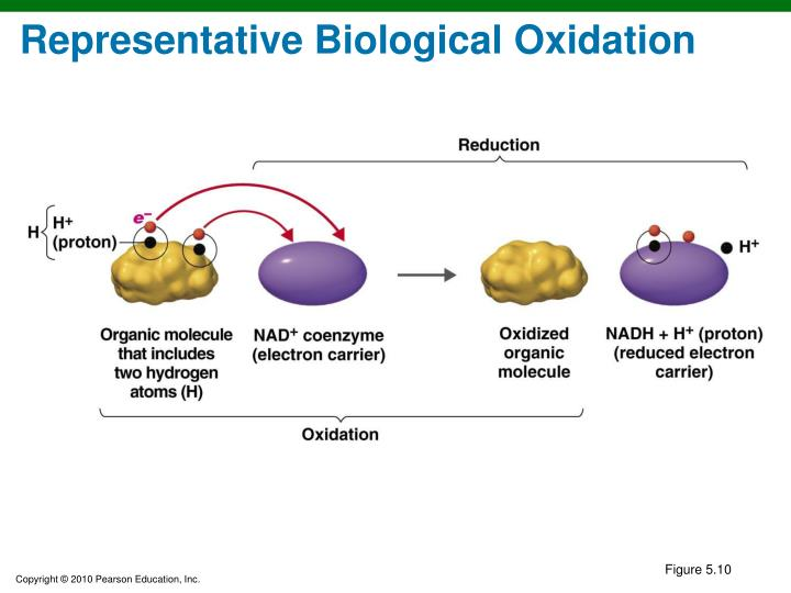 Representative Biological Oxidation