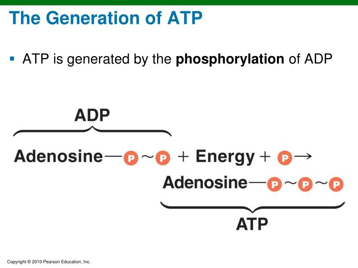 The Generation of ATP