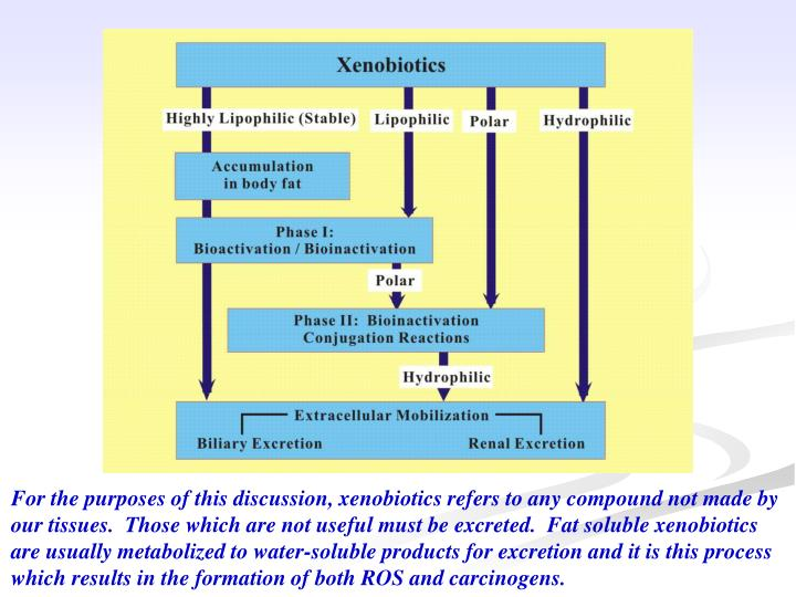 For the purposes of this discussion, xenobiotics refers to any compound not made by our tissues.  Those which are not useful must be excreted.  Fat soluble xenobiotics are usually metabolized to water-soluble products for excretion and it is this process which results in the formation of both ROS and carcinogens.