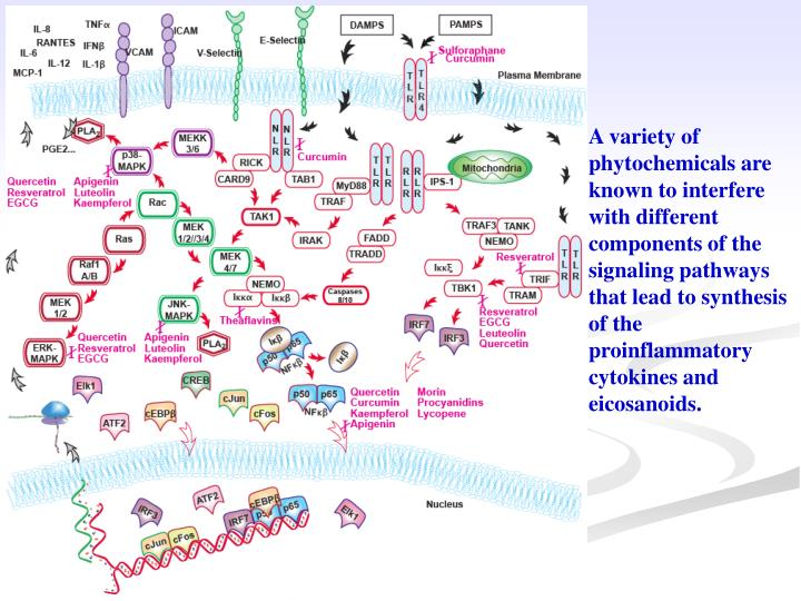 A variety of phytochemicals are known to interfere with different components of the signaling pathways that lead to synthesis of the proinflammatory cytokines and eicosanoids.
