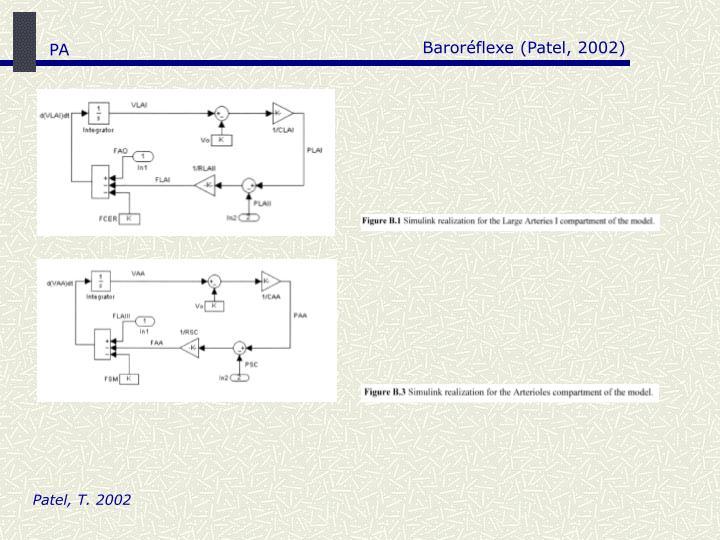 Baroréflexe (Patel, 2002)