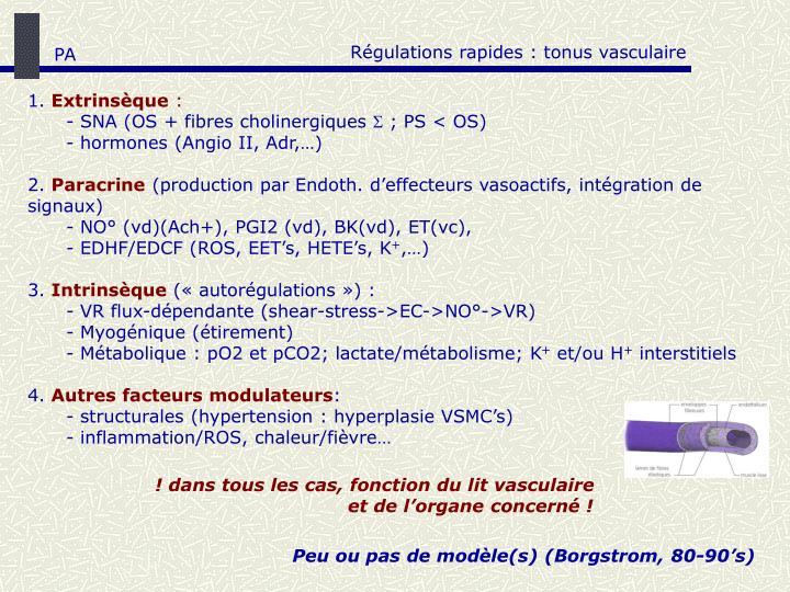 Régulations rapides : tonus vasculaire