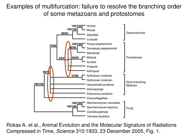 Examples of multifurcation: failure to resolve the branching order