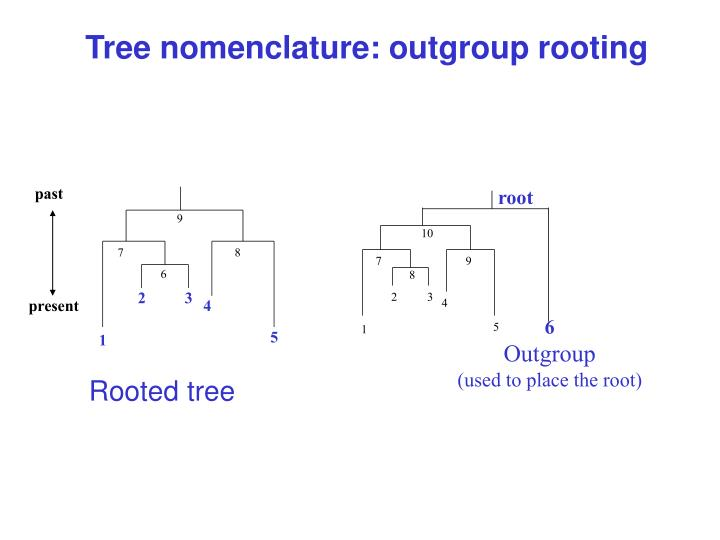 Tree nomenclature: outgroup rooting