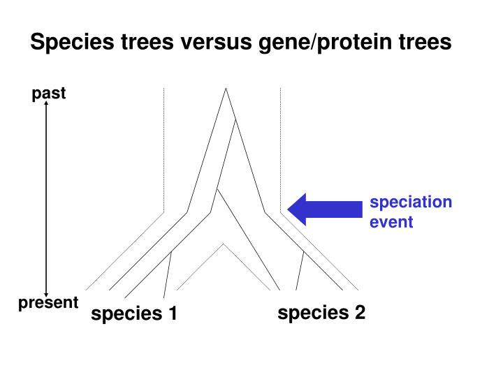 Species trees versus gene/protein trees