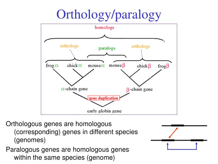 Orthology/paralogy