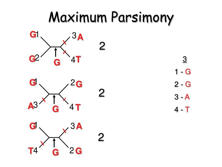 Maximum Parsimony