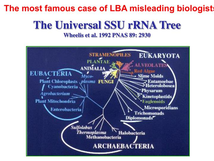 The most famous case of LBA misleading biologists…