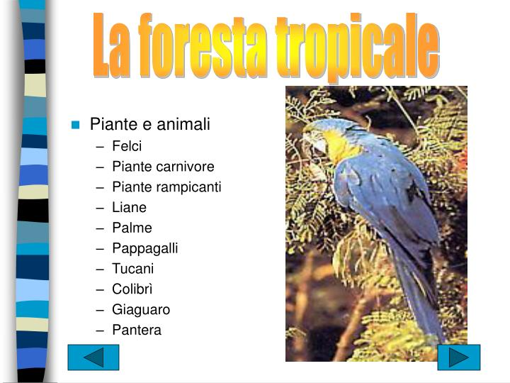 La foresta tropicale
