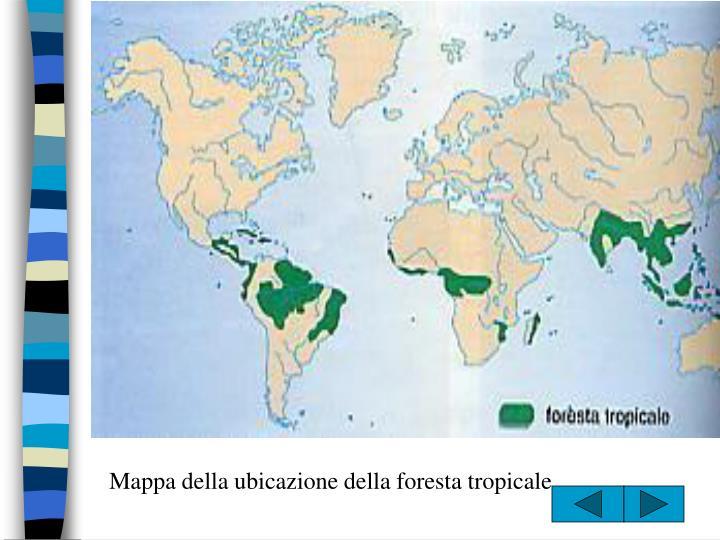 Mappa della ubicazione della foresta tropicale