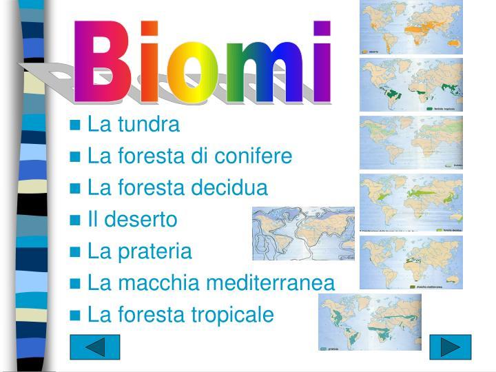 Biomi