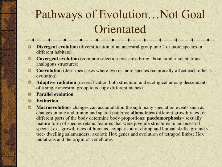 Pathways of Evolution…Not Goal Orientated