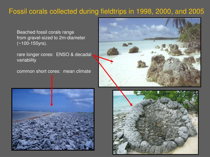 Fossil corals collected during fieldtrips in 1998, 2000, and 2005
